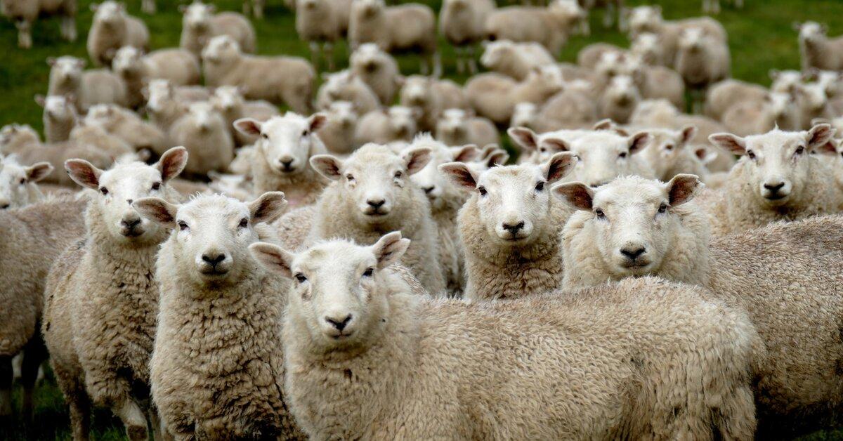 פרשת שבוע, פרשת השבוע, פרשת תרומה, מנהיגות, משבר כלכלי, יובל לינדן, שבת זכור, עמלק, עדר ללא רועה